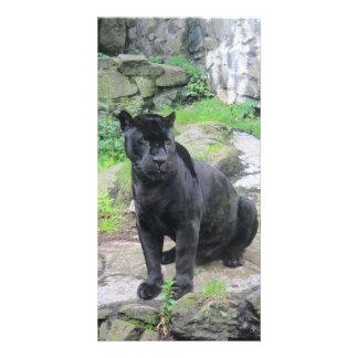 Big Black Jaguar Cat on Sitting on Rock Customized Photo Card