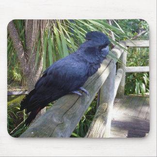 Big_Black_Parrot,_Mousepad_Pad. Mouse Pad