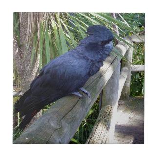 Big_Black_Parrot. Tile