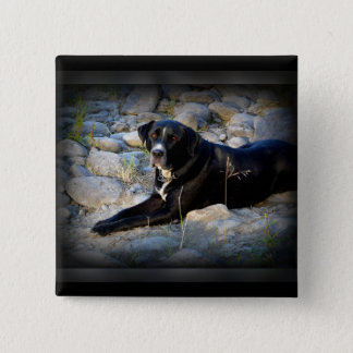 Big Black Pitbull Lab Cross 2 Inch Square Button