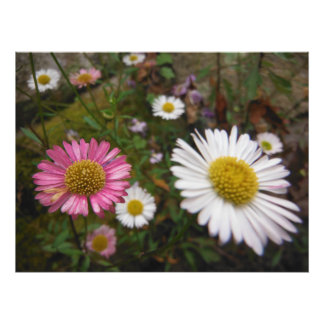 big bright flowers photo print