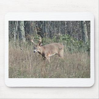 Big buck by james potvin mouse pad