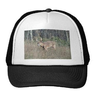 Big buck by james potvin trucker hat
