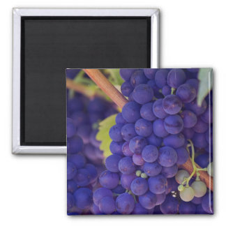 Big Bunch of Juicy Purple Grapes Square Magnet