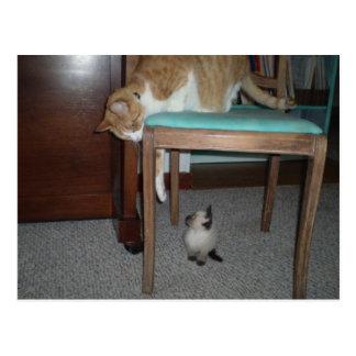 Big Cat Sees Little Kitten Postcard