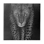Big Cat Tiles