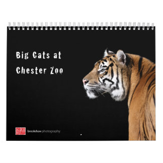 Big Cats at Chester Zoo Calendar
