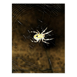 Big Creepy Spider on it's Web Postcard