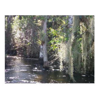 Big Cypress Postcard