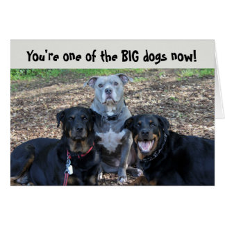 Big Dogs Now Graduation Card