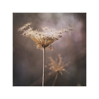 Big Dried Fall Queen Anne's Lace Flower Grunge Canvas Print