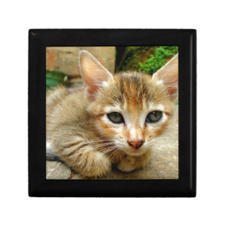 Big Eye Kitten Keepsake Boxes