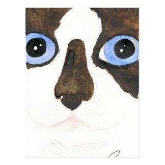 Big Eyed Snowshoe cat Postcard