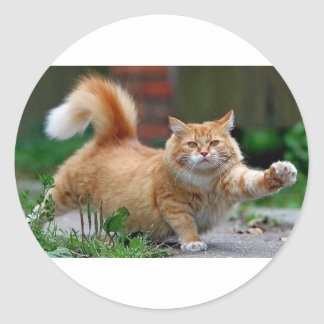 Big Fat Orange Cat Classic Round Sticker