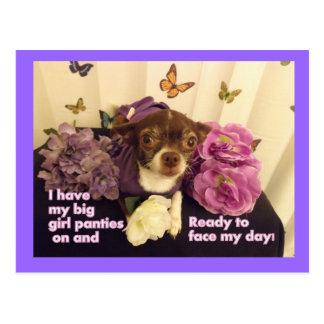 Big girl Panties Chihuahua Card Postcard