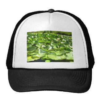 big green lilypads on a pond trucker hat