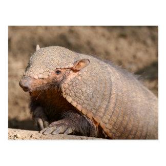 Big hairy armadillo postcard