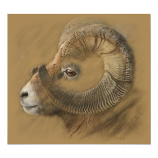 Big Horn Chalk Drawing Poster