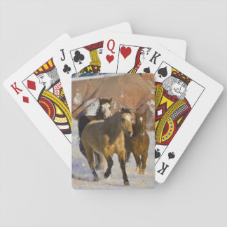Big Horn Mountains, Horses running in the snow 3 Playing Cards