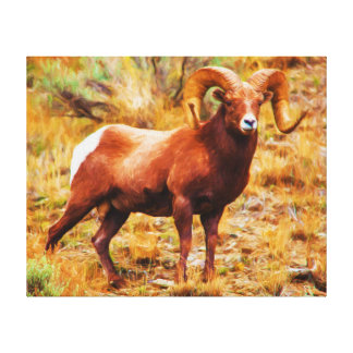 Big Horn Ram Canvas Print