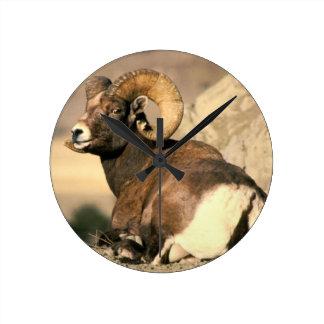 Big Horn Ram, Part of the American Mammal Series Wall Clock
