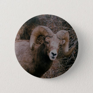 Big Horn Sheep 2 Inch Round Button