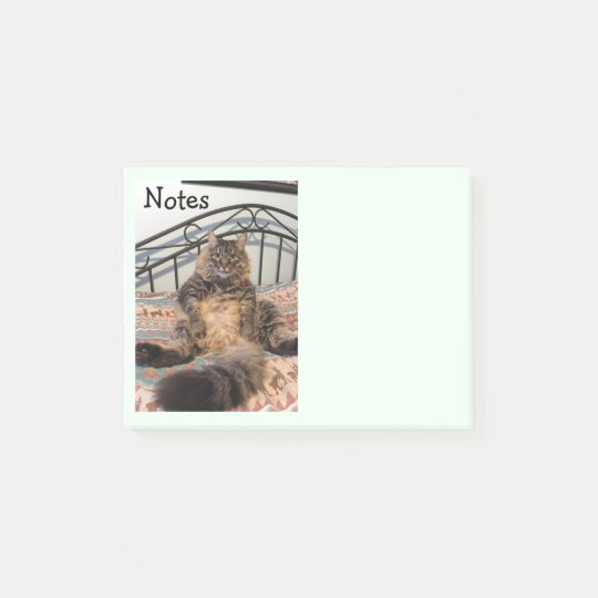 Big Huggable Cat Kimber Notes