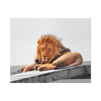 Big lion close-up canvas print
