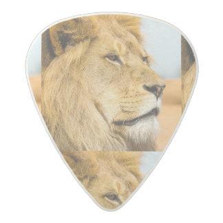 Big lion looking far away acetal guitar pick
