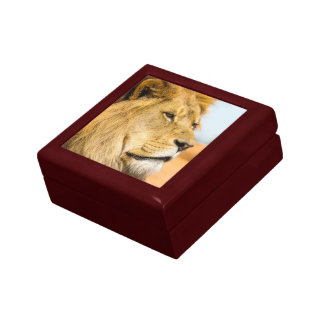 Big lion looking far away gift box