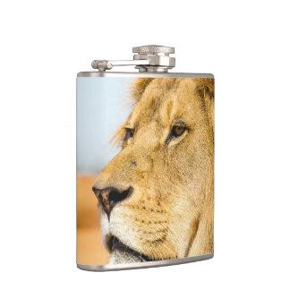 Big lion looking far away hip flask