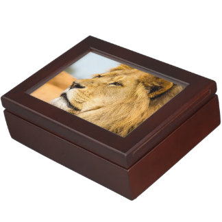 Big lion looking far away keepsake box