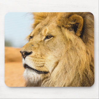 Big lion looking far away mouse pad