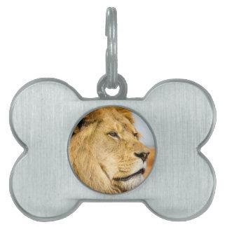 Big lion looking far away pet name tag