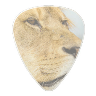 Big lion looking far away polycarbonate guitar pick