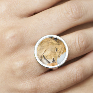 Big lion looking far away ring
