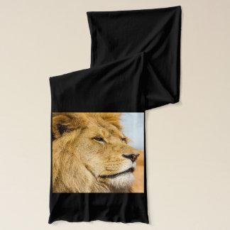 Big lion looking far away scarf