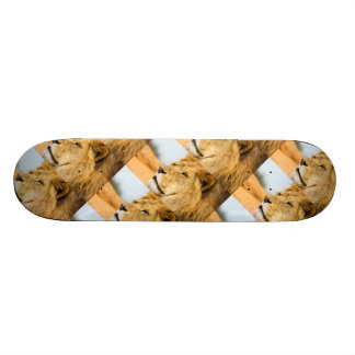 Big lion looking far away skate board deck