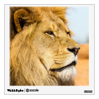 Big lion looking far away wall sticker