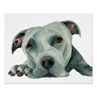 Big Ol' Head - Pit Bull Dog Watercolor Painting Poster