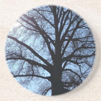 Big Old Aged Tree, Blue Sky, Sunshine Photograph Drink Coaster
