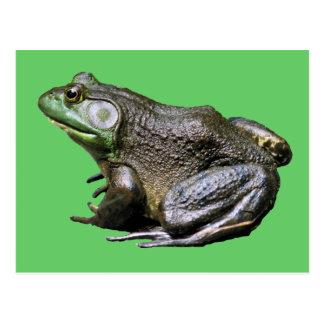 Big Old Bullfrog Animal Postcard