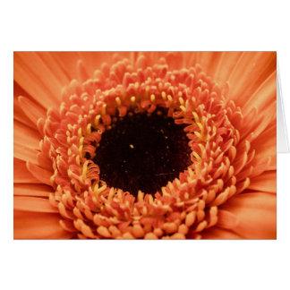 Big Orange Gerbera Daisy Card