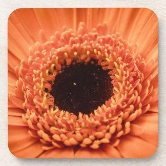 Big Orange Gerbera Daisy Coaster