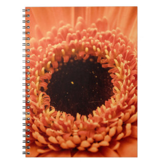 Big Orange Gerbera Daisy Notebook