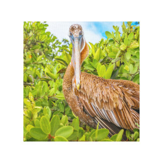 Big Pelican at Tree, Galapagos, Ecuador Canvas Print