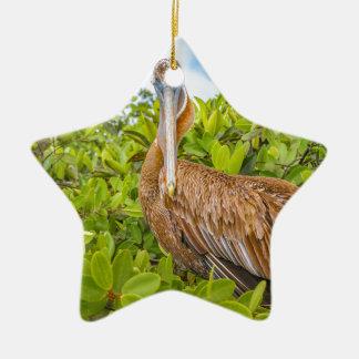 Big Pelican at Tree, Galapagos, Ecuador Ceramic Star Ornament