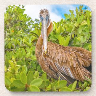 Big Pelican at Tree, Galapagos, Ecuador Coaster