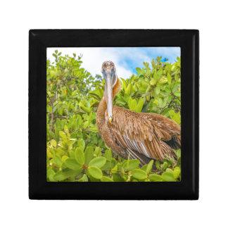Big Pelican at Tree, Galapagos, Ecuador Gift Box