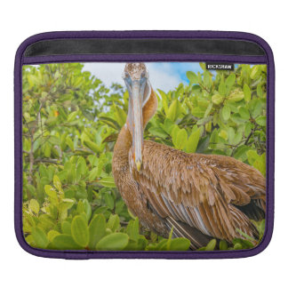 Big Pelican at Tree, Galapagos, Ecuador iPad Sleeve